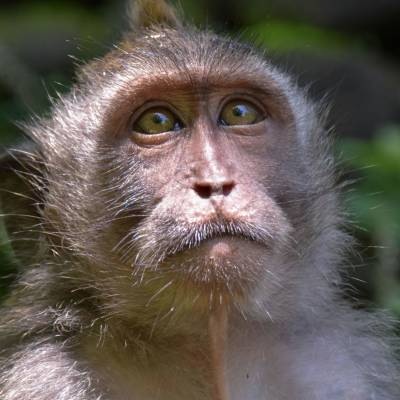 this is a photo of a monkey in Ubud