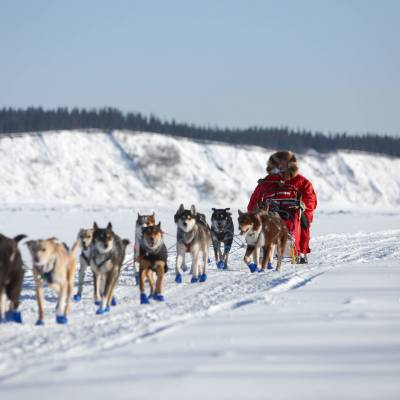 Dog Sled in Galena