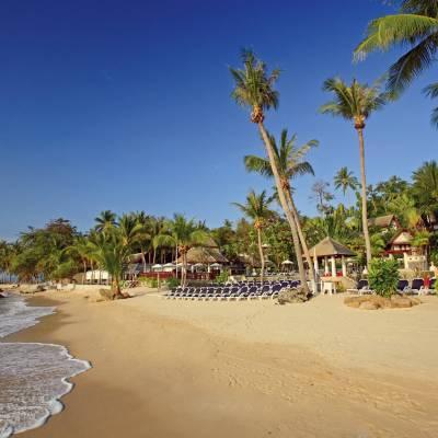 a group of palm trees on a sandy beach