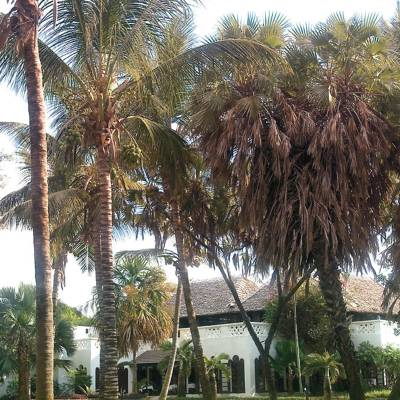 a group of palm trees next to a tree