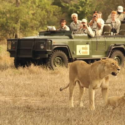 Safari in Kruger National Park