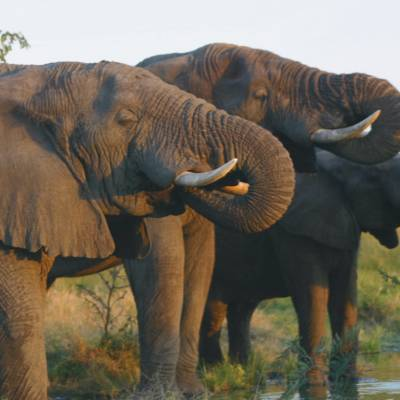 Elephants at a watering hole in South Africa
