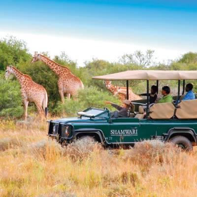 a group of giraffe standing next to a green field
