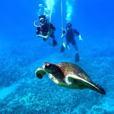 SNUBA® diving