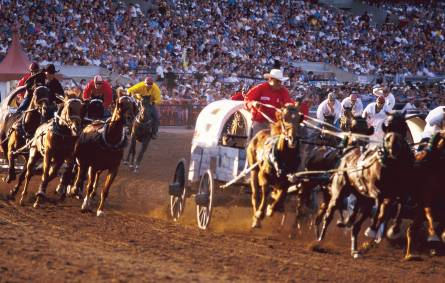 a group of people riding on the back of a horse with Calgary Stampede in the background