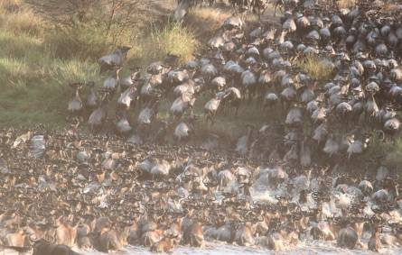 Great migration river
