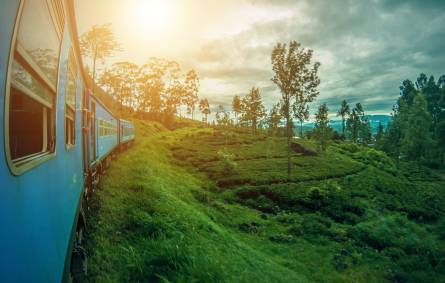 A train at Nuwara Eliya, Sri Lanka, passes a tea plantation