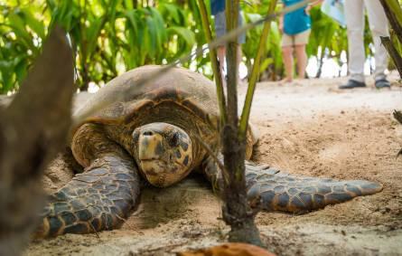 Denis Private Island, Tortoise, Seychelles