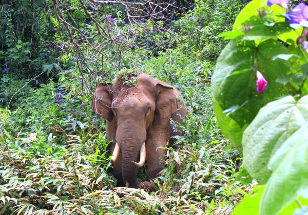 Elephant in Periyar