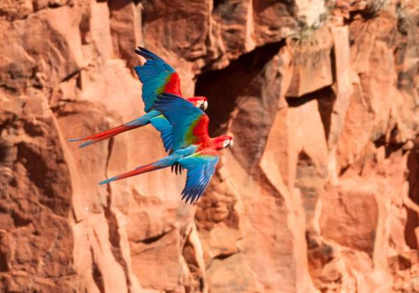 a colorful bird perched on top of a rock