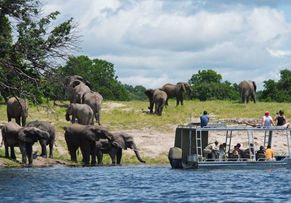 Elephant in Zambezi River