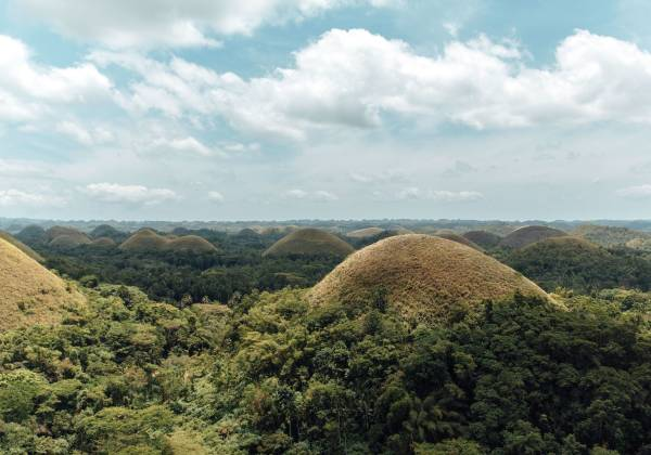 a group of bushes with Chocolate Hills in the background
