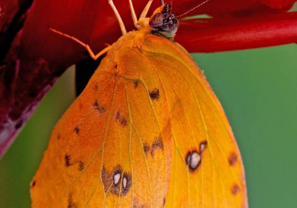 Ecuador Butterfly