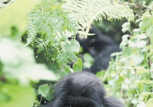 a black bear in a garden
