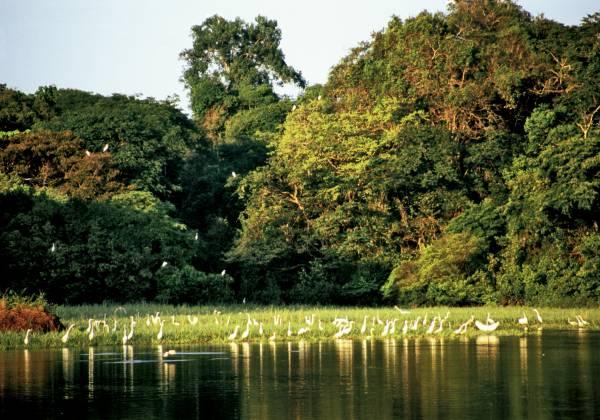 The Amazones