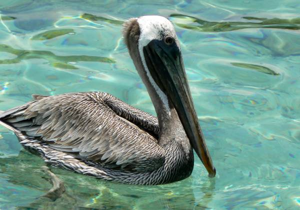 a bird swimming in water