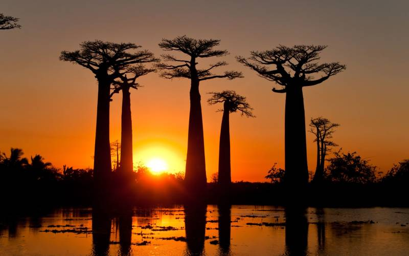 a sunset over a body of water with Avenue of the Baobabs in the background