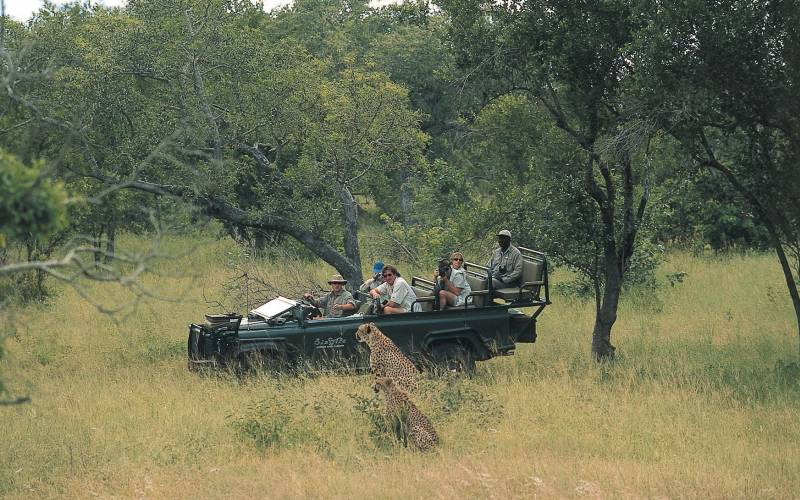 Sabi Sand Game Reserve Safari