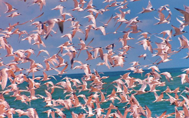 Mozambique Birds