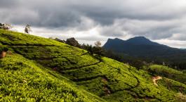 eine Nahaufnahme eines üppigen grünen Hügels
