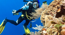 Tiefseetaucher vor Korallenriff
