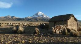 eine Schafherde, die auf einem Berg steht