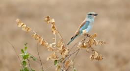 ein kleiner Vogel auf einer Blume thront