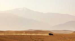 a close up of a desert field with a mountain in the background