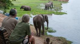 Unsere Gu00e4ste beobachten Elefanten im Goliath Safaris Tented Camp in Mana Pools, Simbabwe