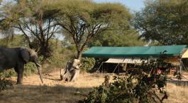 Safarizelte unter Bu00e4umen im Mdonya Old River Camp, Ruaha in Tansania
