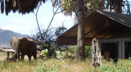 ein Elefant, der im Gras steht