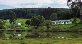 eine Herde von Rindern, die auf einer üppigen grünen Wiese grasen