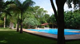 eine leere Parkbank neben einer Palme