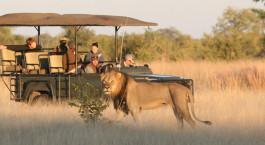 Safaritour im Camp Hwange in Hwange, Zimbabwe
