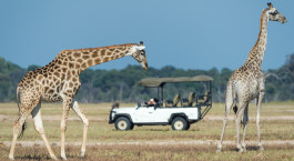 Safarierlebnis im Davisonu2019s Camp in Hwange, Simbabwe