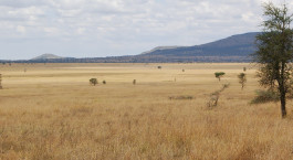 Landschaft im Nieleze Serengeti Camp, Tanzania