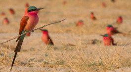 ein Vogel, der auf einem trockenen Grasfeld sitzt
