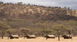 eine Giraffenherde, die auf einem trockenen Grasfeld steht