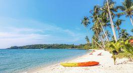 eine Gruppe von Palmen an einem Strand in der Nähe eines Gewässers