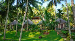 eine Gruppe von Palmen neben einem Baum