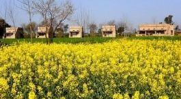 eine gelbe Blume in einem Feld