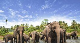eine Elefantenherde, die neben einem Gewässer steht