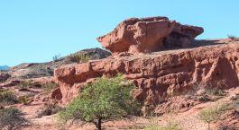 Karge Felsenlandschaft mit Baum in Cafayate, Argentinien