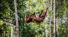 ein Affe in einem Wald
