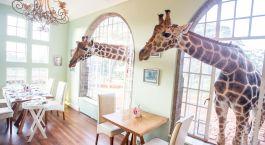 Speisezimmer im Giraffe Manor Hotel in Nairobi, Kenia