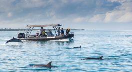 Bootsausflug zu den Delfinen