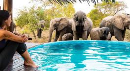 Frau beobachtet die Elefanten im Kru00fcger Nationalpark, Su00fcdafrika
