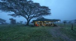 ein großer Baum in einem Grasfeld