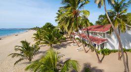 ein Strand mit einer Palme