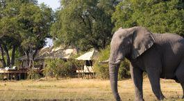 Elefant vor dem Camp im Zarafa Camp in Okavango Delta, Botswana